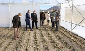 Kırkağaç'taki Büyükşehir destekli seralarda üretim başladı