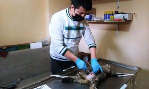 Kırkağaç Belediyesi sokak hayvanlarına sahip çıkıyor