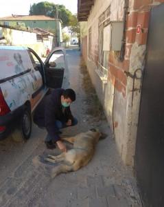 sokak-hayvanlari3
